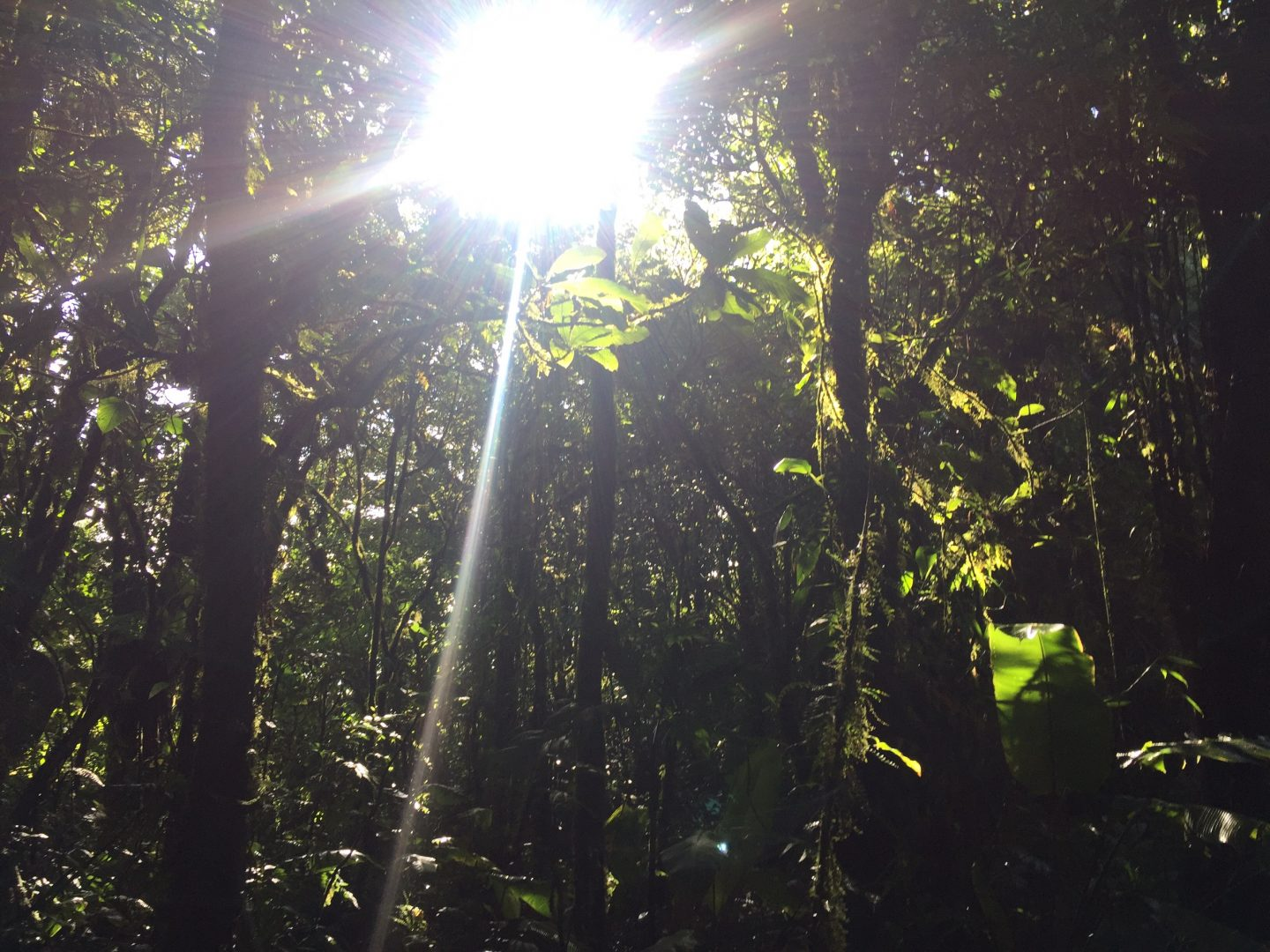 The rainforest of Central America