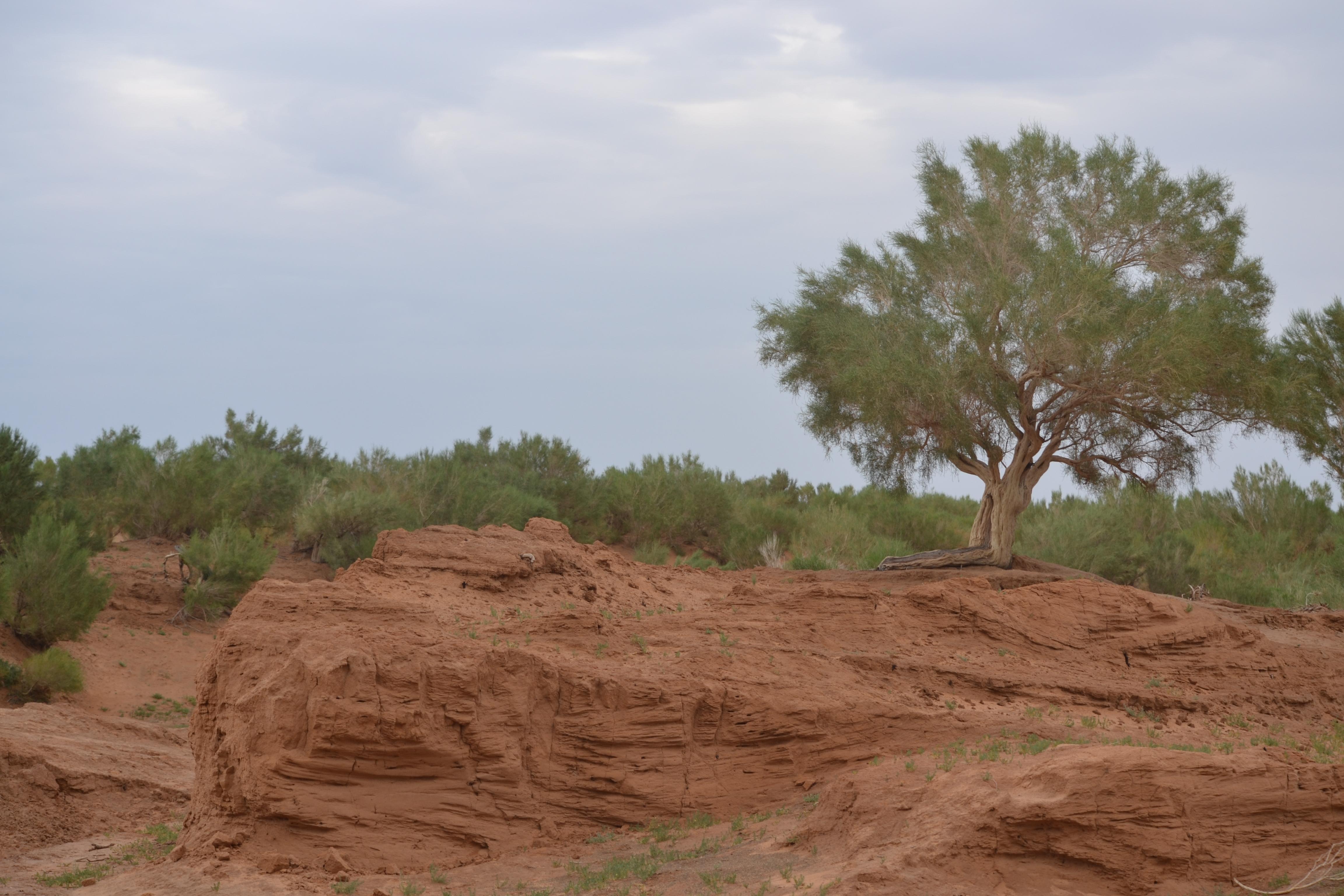 image of gobi desert