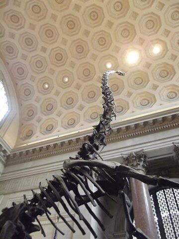 Image of the Natural History Museum, a must see for first time visit to New York