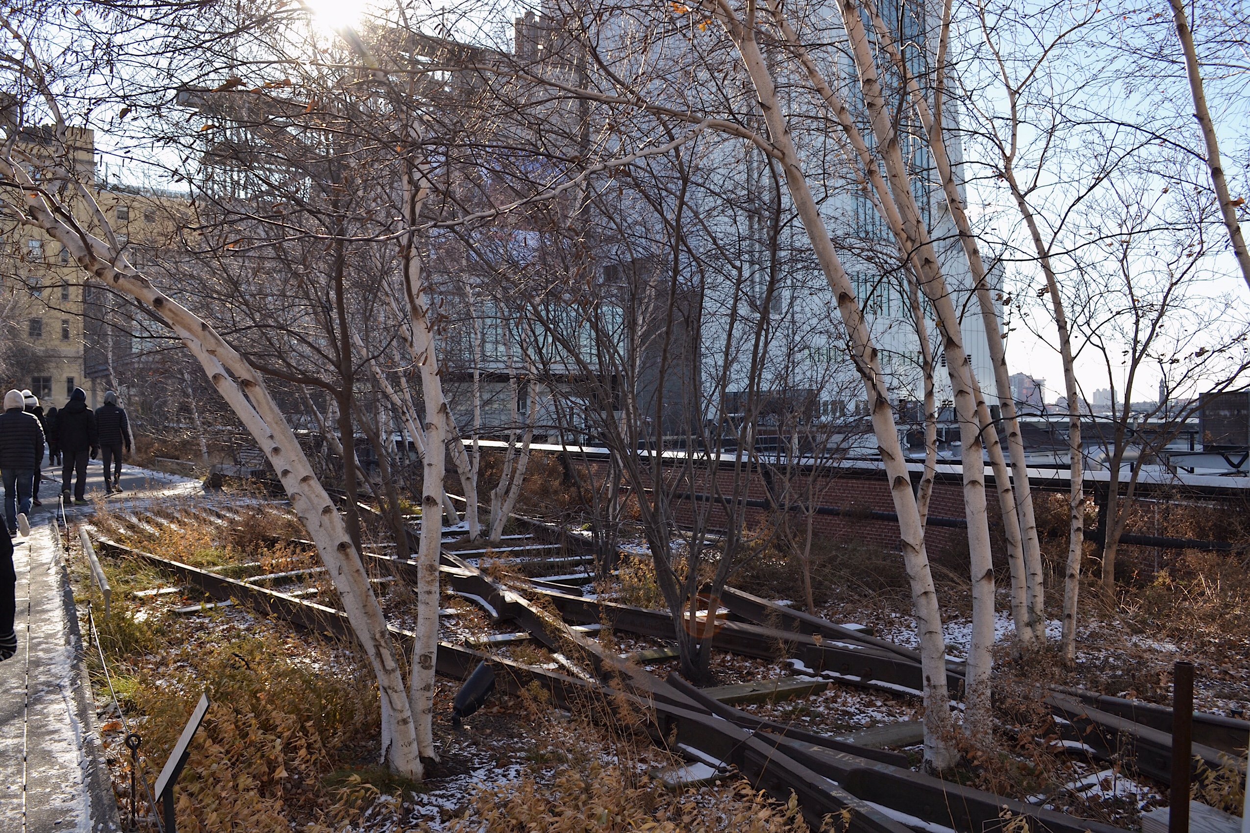 Image of the highline in New York