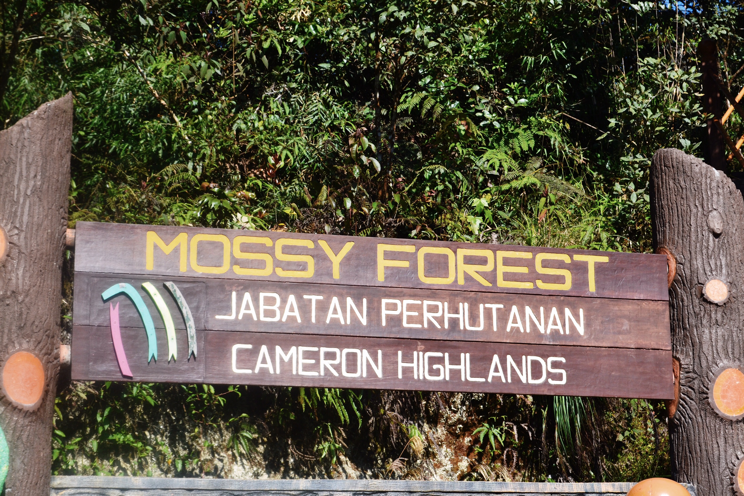 Image of Mossy Forest in Malaysia