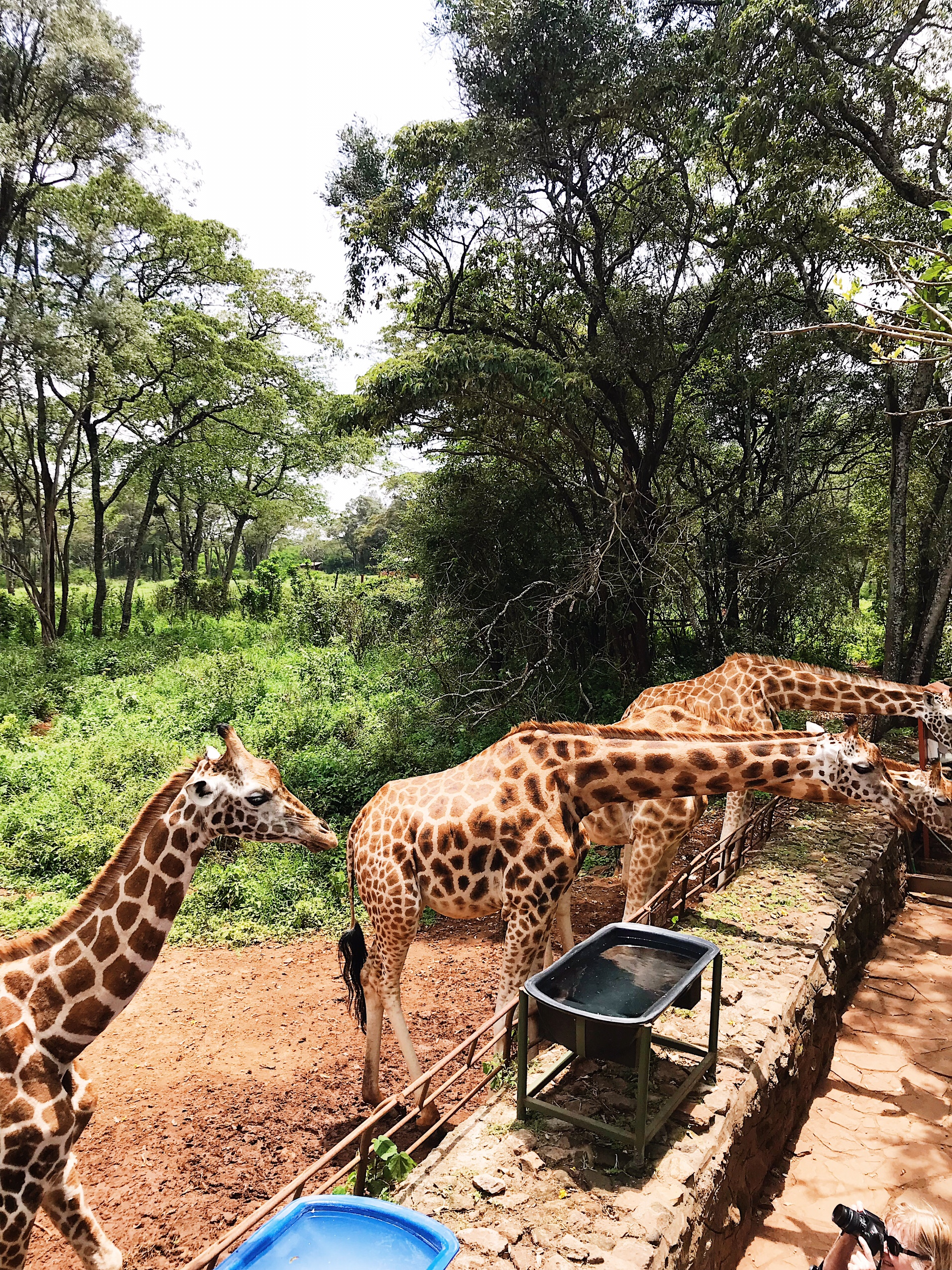 Image of giraffe centre in Nairobi