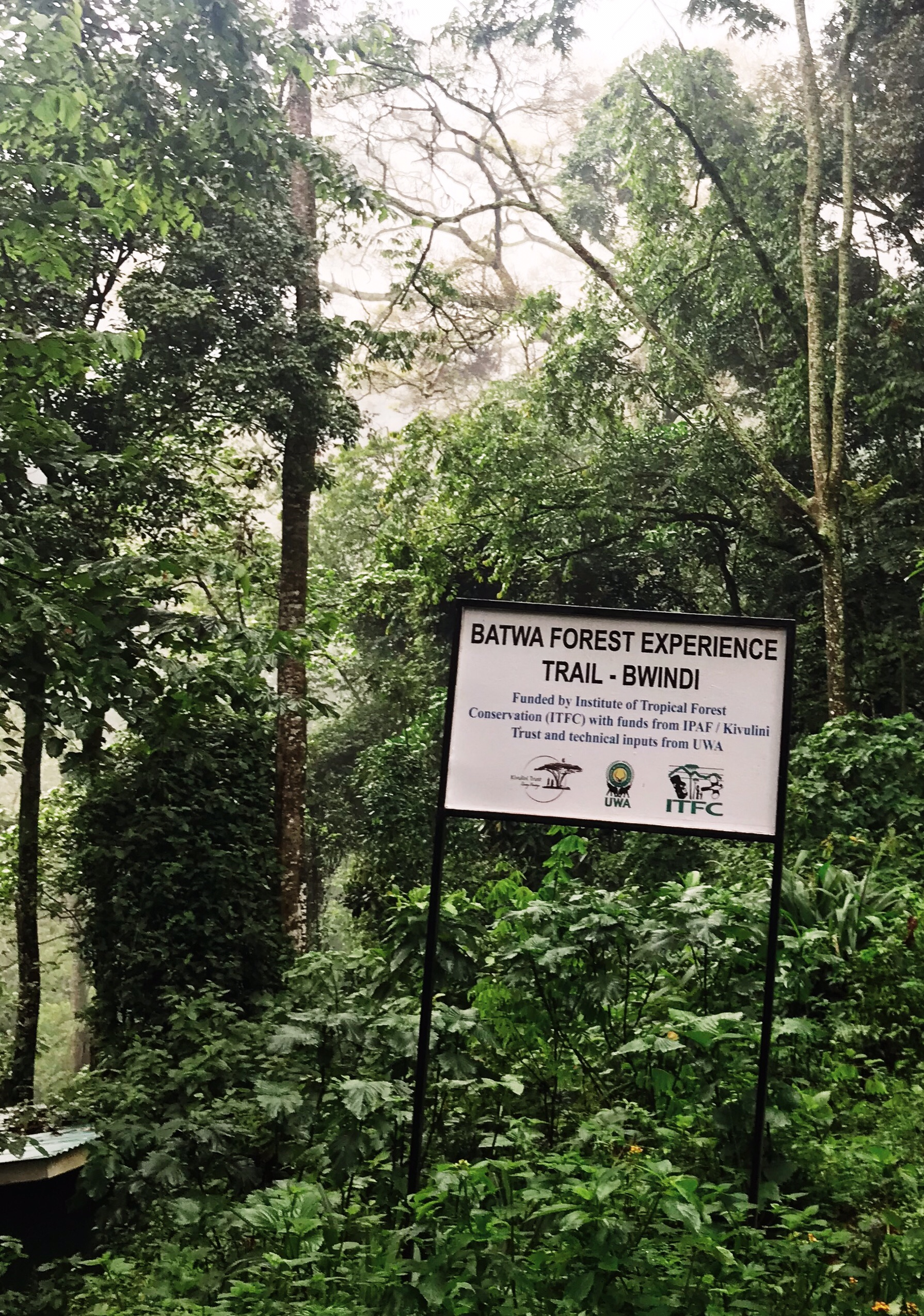image of entrance to bwindi forest when gorilla trekking