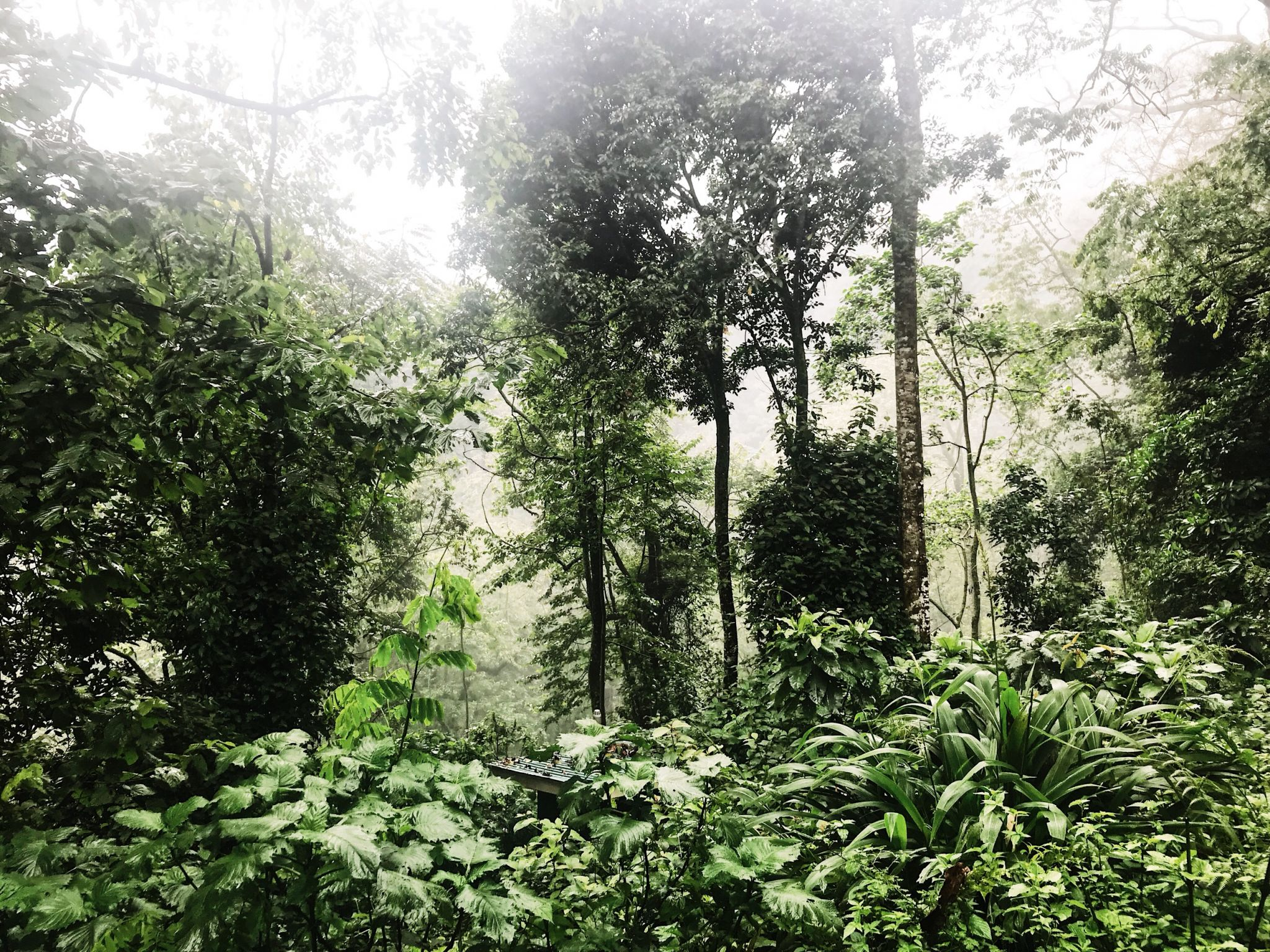 image of impenetrable forest hiked through when gorilla trekking in Uganda