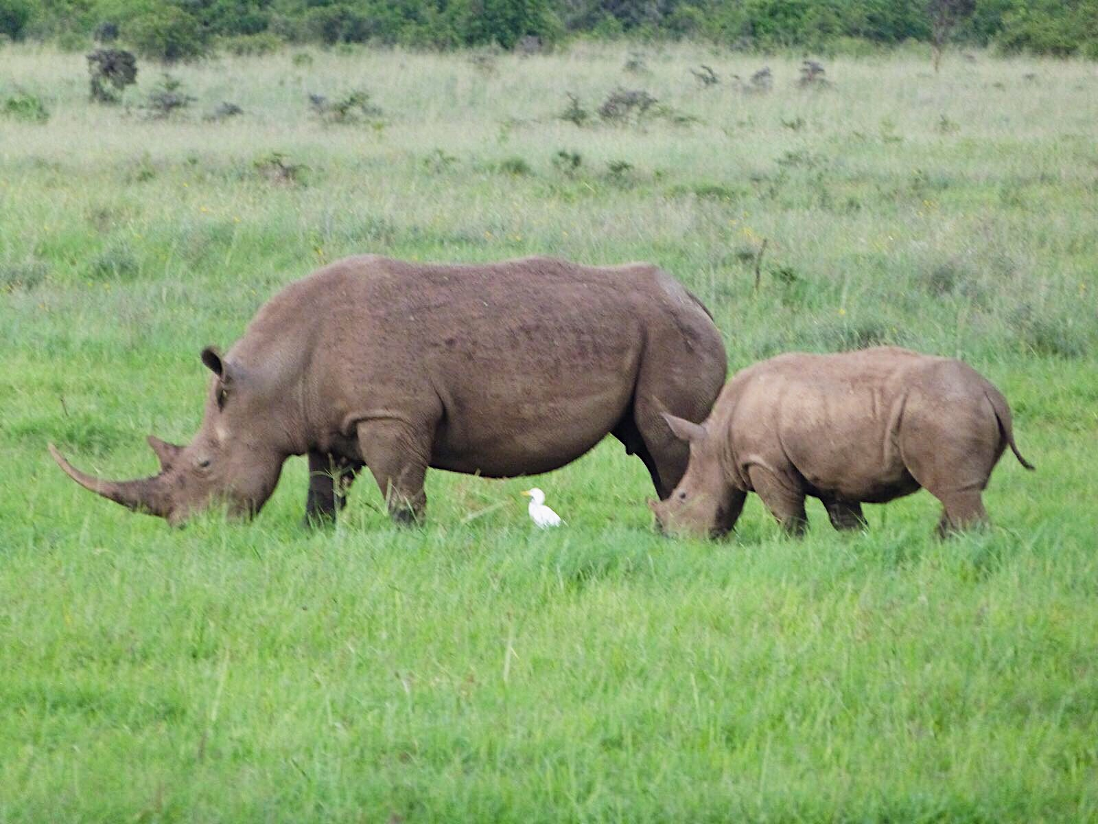 image of rhino in Nairobi National Park, how to spend a day in Nairobi