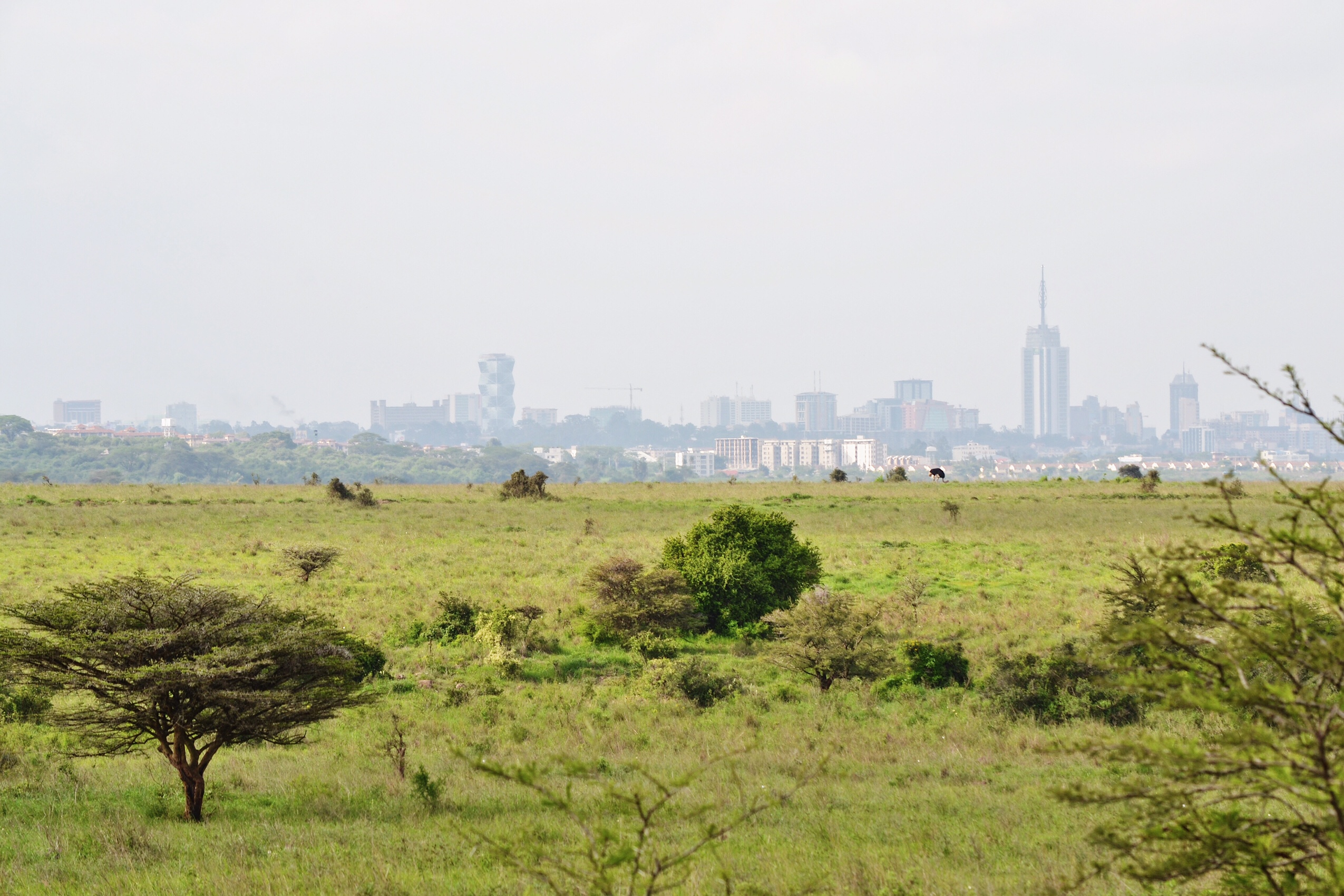 Image of Nairobi National Park