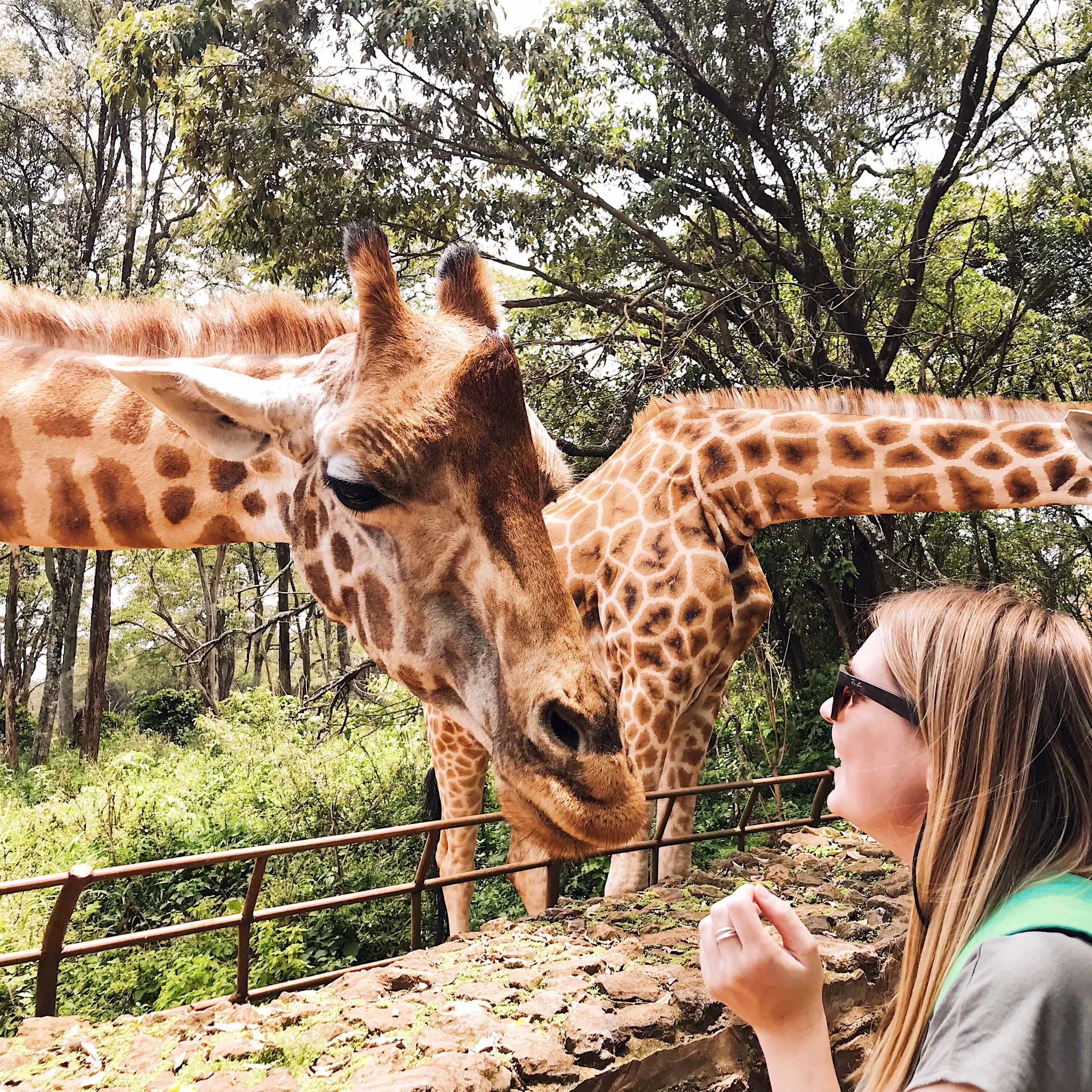 Image of giraffes in Nairobi