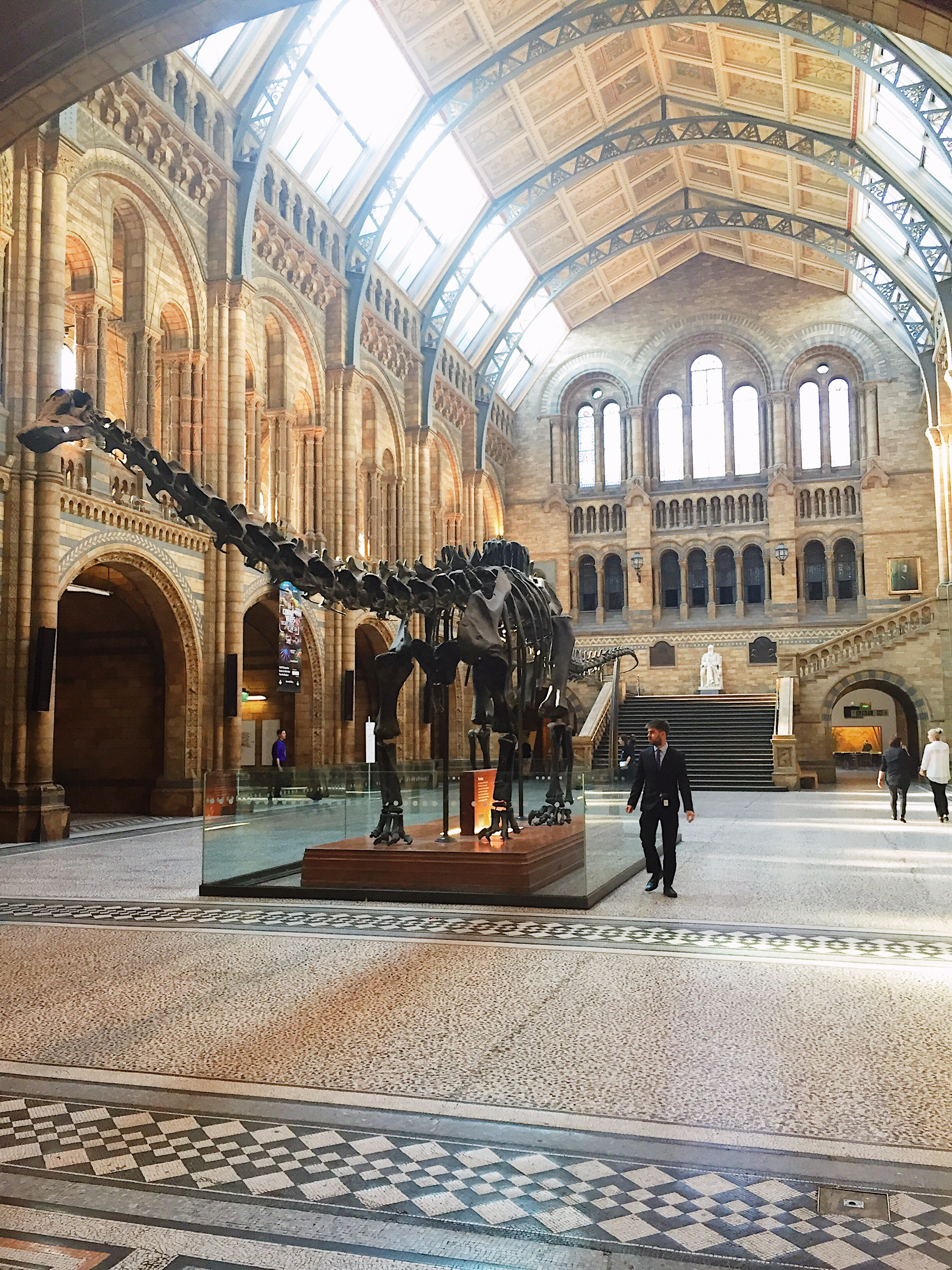 Image of Dippy at Natural History Museum