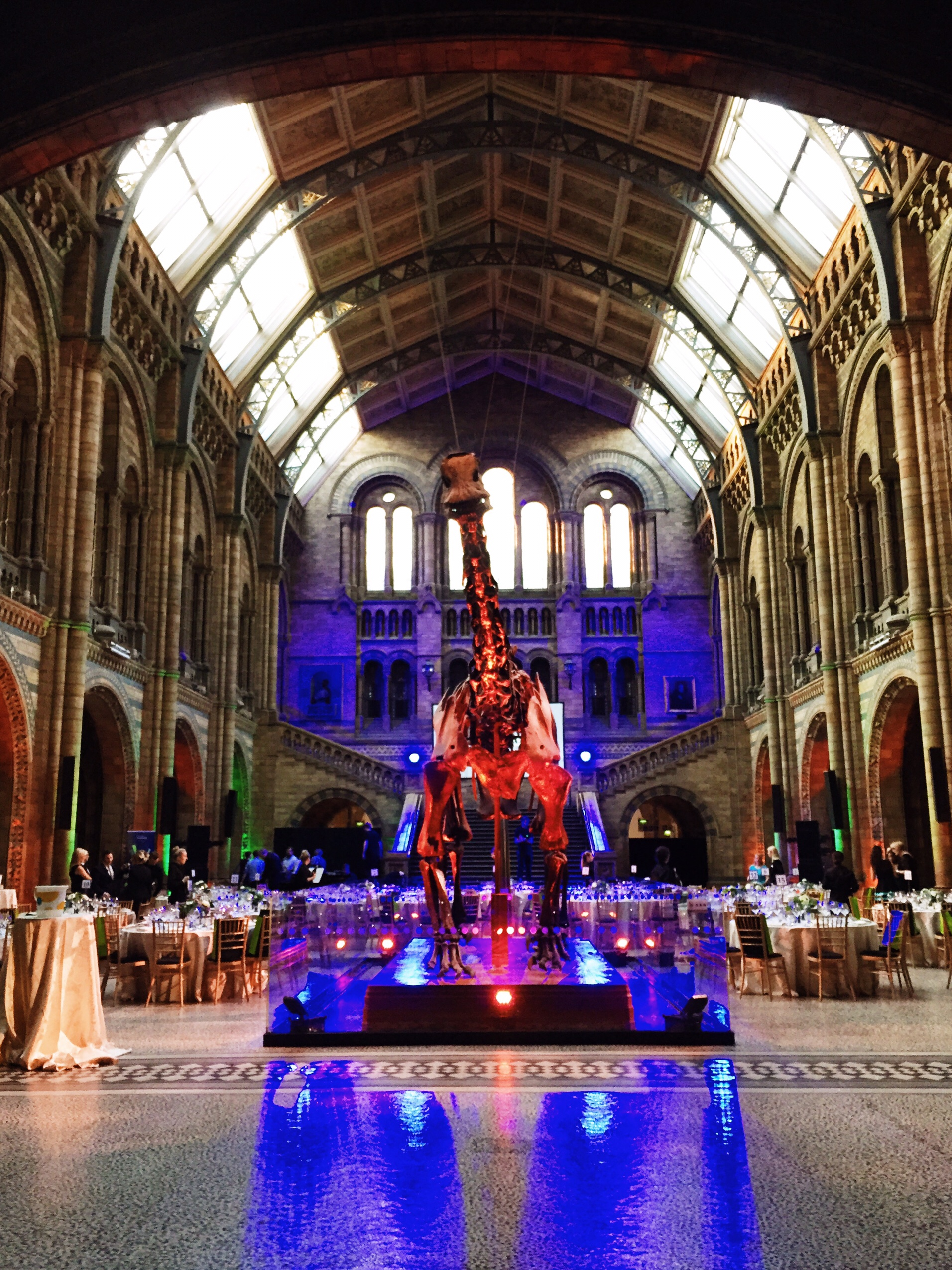 Image of Dippy lit up at Natural History Museum