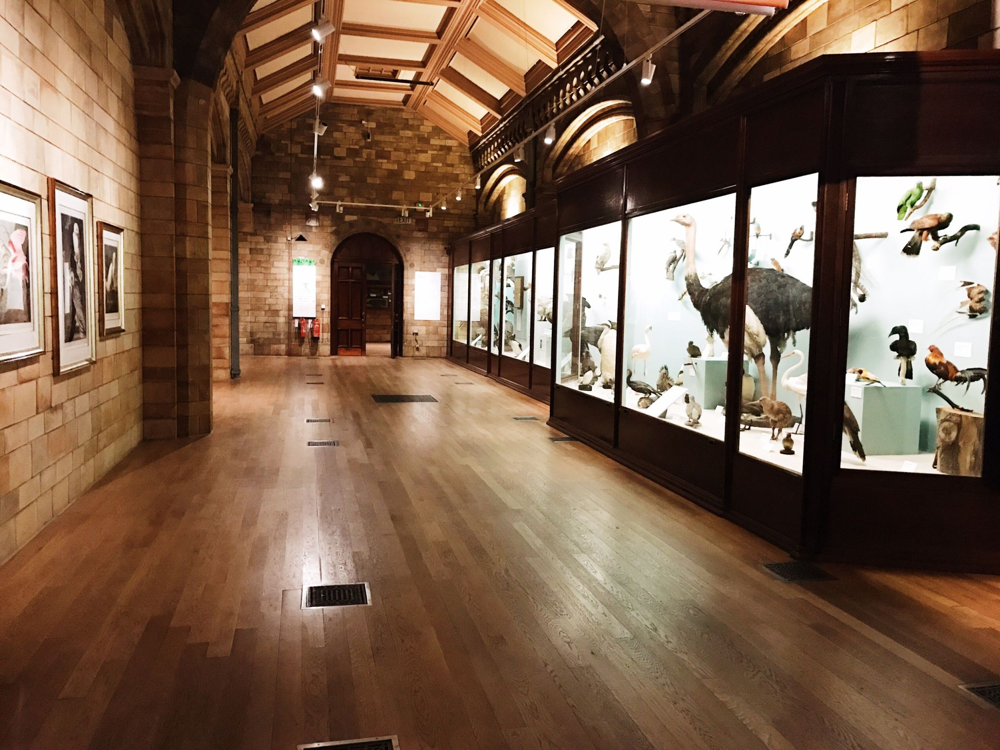 Image of birds gallery in Natural History Museum