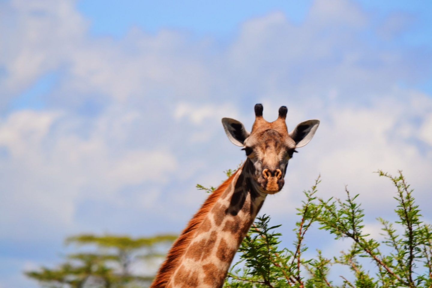 The Selous Game Reserve in Tanzania