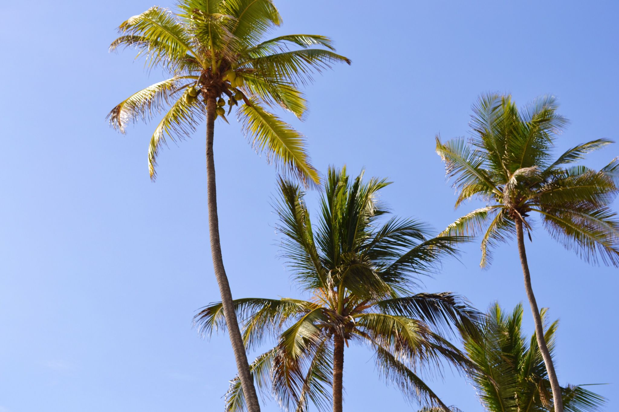 Image of palm trees in Zanzibar