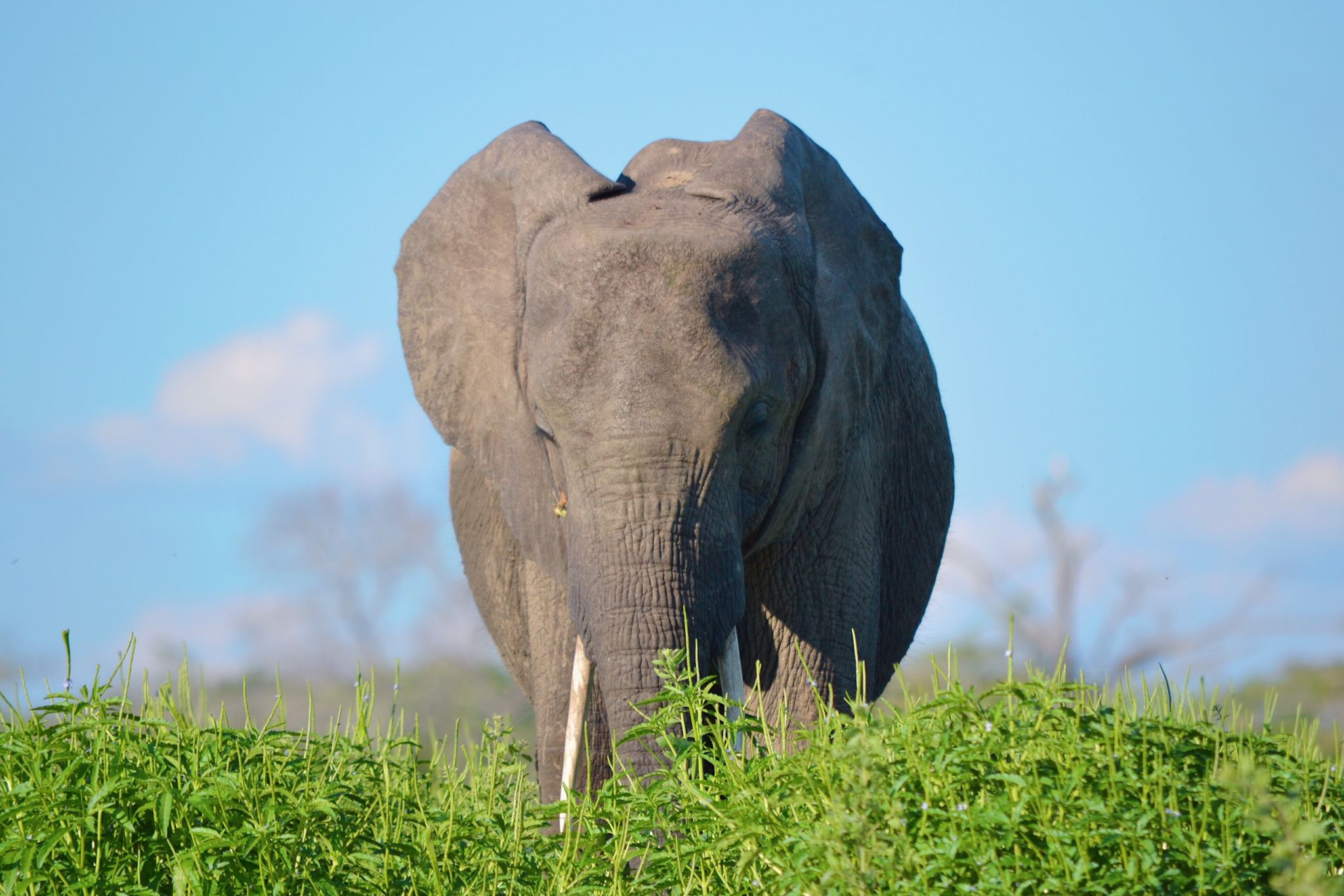 Picture of elephant wildlife in Selous