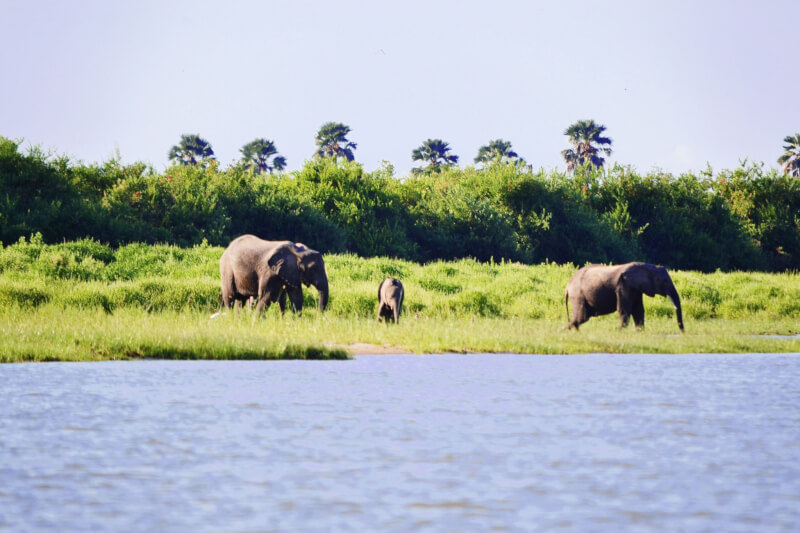 Image of elephants in Selous, best places to travel to in Autumn