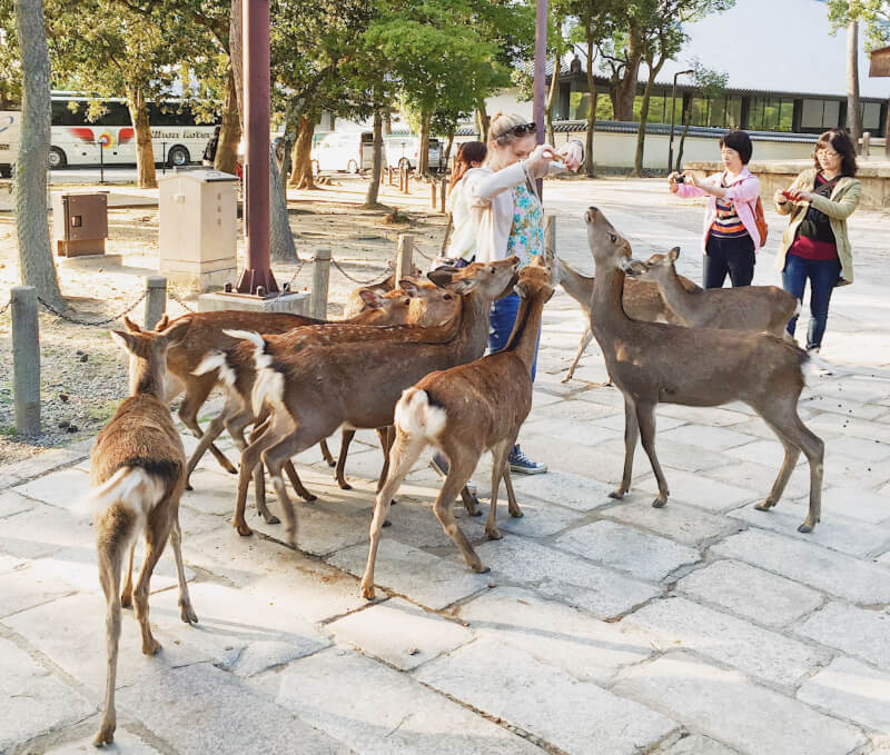Image of deer in Nara Park