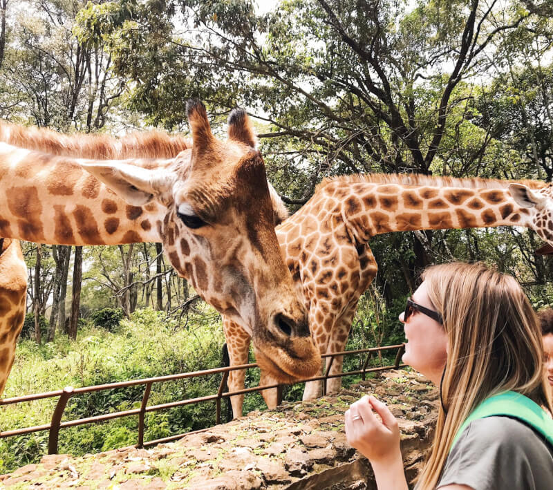 image of meeting giraffes in Nairobi