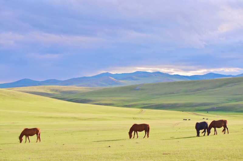image of Mongolia - best places to travel to in summer