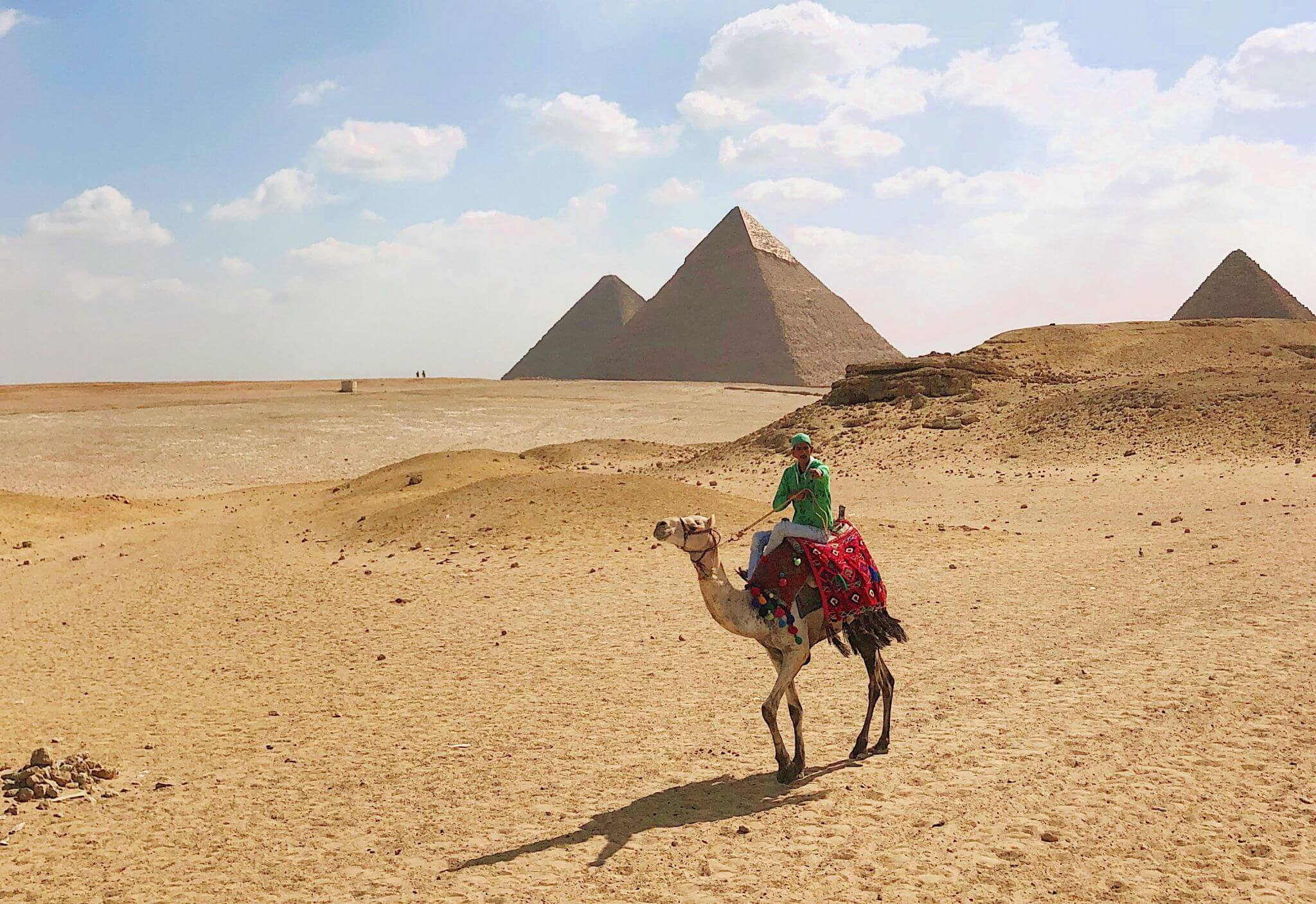 image of a camel in front of the Pyramids of Giza, one of the reasons you need to visit Egypt