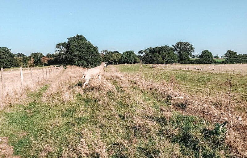 image of Caistor Roman town in Norfolk