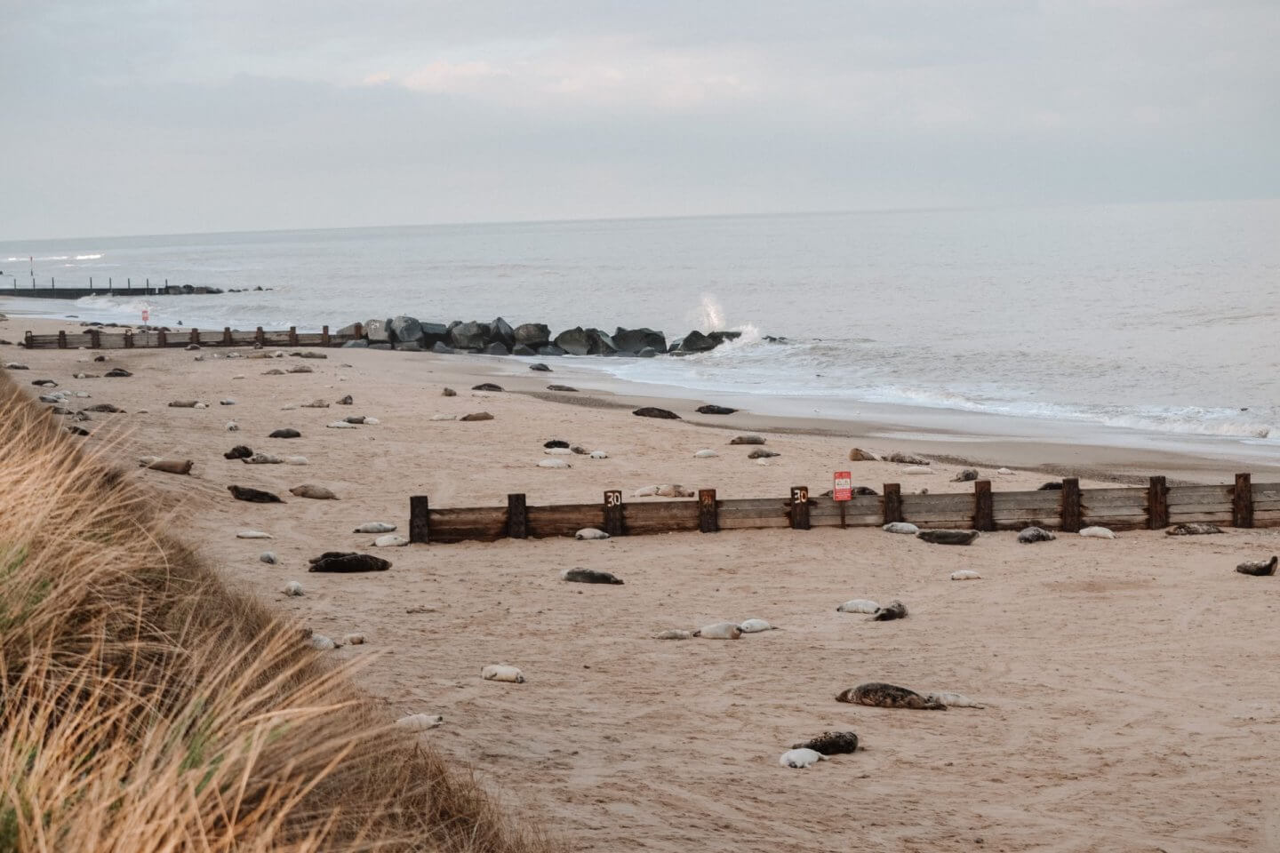 image of the seals at horsey