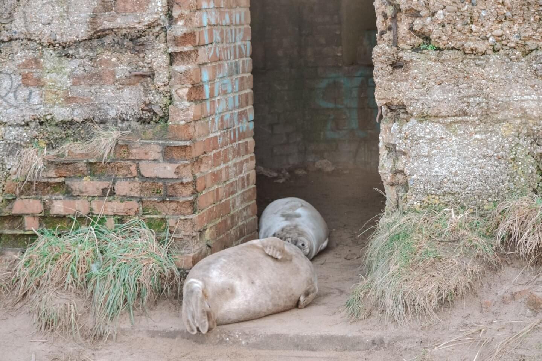 image of seals in pill box at Horsey Gap