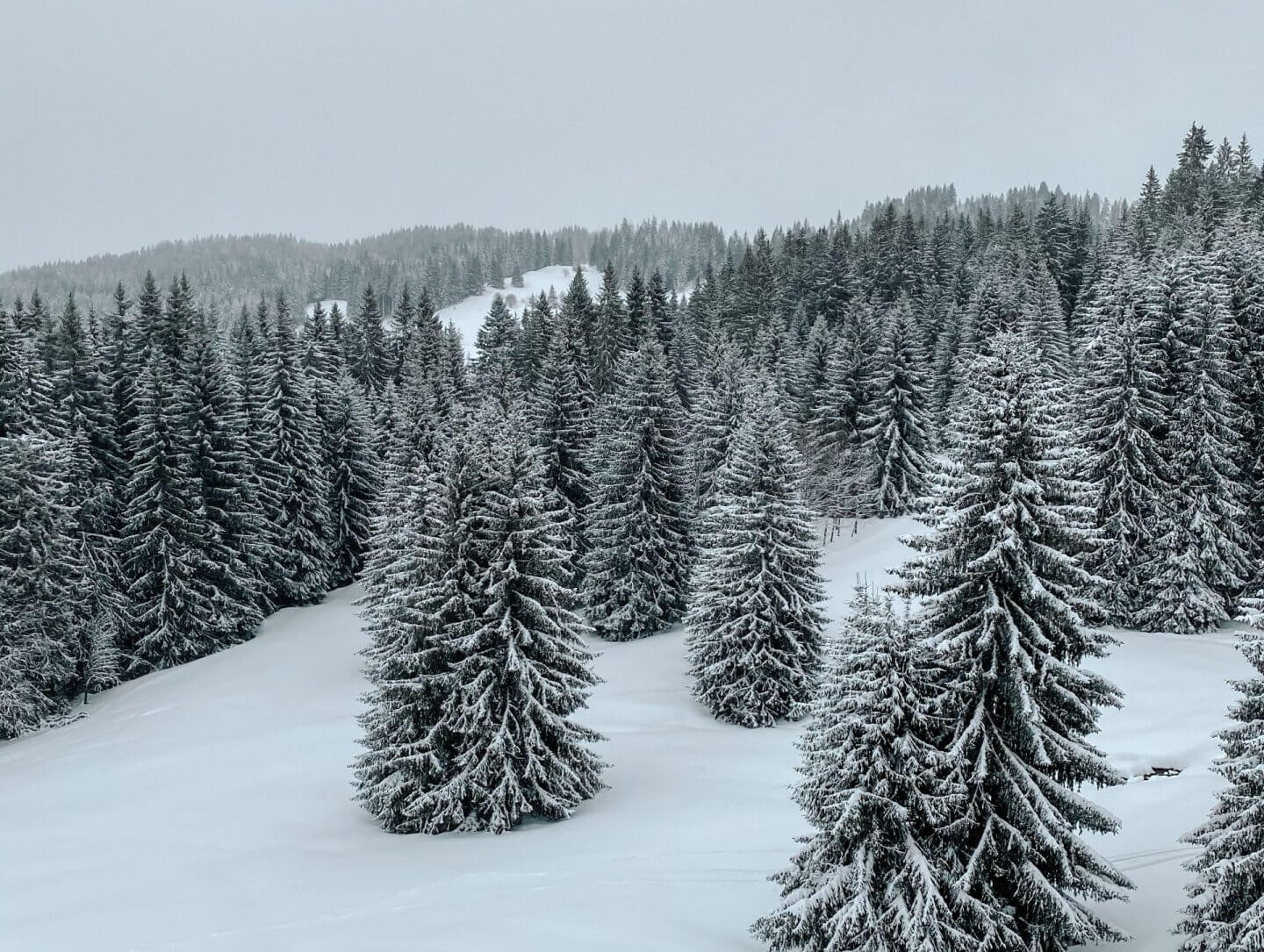 image of snow covered trees in Les Gets in the French Alps, France